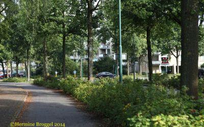 De Leijen - Rotonde 1 bomen