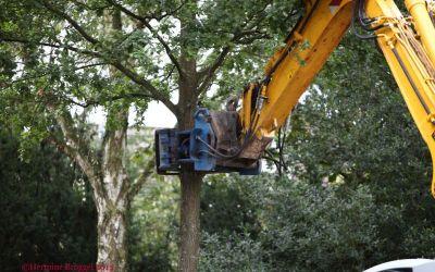De Leijen - 1 - bomen rooien