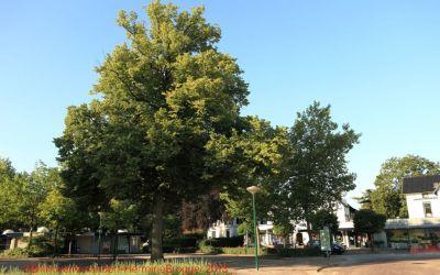 12.9.1 Vinkenplein maart 2018-boom omzagen